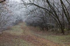 Endlose Spur in einem Winterwald Stockfotografie