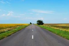 Endlose Straße durch eine blühende Wiese an einem sonnigen Tag stockfotografie
