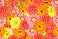 Endloser Blumenmusterhintergrund Stockbilder