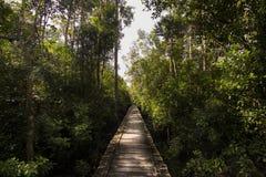 Endloser hölzerner Weg mitten in dem Dschungel Lizenzfreie Stockfotos