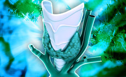 Endocrine parathyroid gland Stock Image