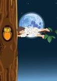 Endormi sur un arbre Images stock