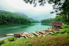 Endroit célèbre, brouillard, forêt, climat tropical, hiver photographie stock libre de droits