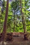 Endroit du feu dans la forêt photos libres de droits