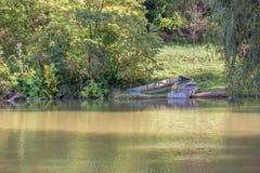 Endroit idyllique avec des bateaux sur l'eau Images libres de droits