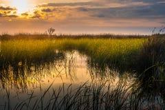 Endroit marécageux au coucher du soleil, parc national du Kolkheti Image stock