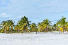 Endroit merveilleux sur terre, le soleil et le sable avec des palmiers par la mer Photos stock