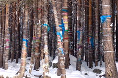 Endroit païen de puissance parmi le Buryats dans Arshan sur la source sacrée sur la rivière Kyngarga photographie stock