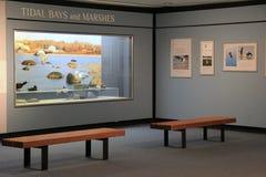 Endroit paisible où quelqu'un peut s'asseoir et se renseigner sur les baies et les marais de marée de l'état de New-York, le musé Images stock