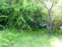 Endroit reculé du vieux jardin d'Unmaintained avec les buissons et le De Photographie stock