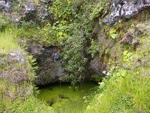 Endroit sacré d'arbre de Garoé avec des trous, EL Hierro, Îles Canaries, Espagne photo stock