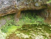 Endroit sacré d'arbre de Garoé avec des trous, EL Hierro, Îles Canaries, Espagne photos stock