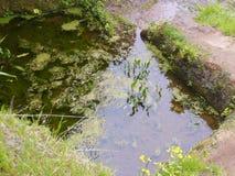 Endroit sacré d'arbre de Garoé avec des trous, EL Hierro, Îles Canaries, Espagne photos libres de droits
