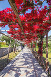 Endroits pittoresques sur Capri Photo libre de droits