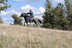 Endurance ride wild horse breed. Man endurance riding a trained Spanish Mustang royalty free stock photos