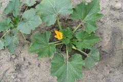 Endurezca el flor anaranjado próspero de la tierra imagenes de archivo