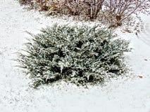 Enebro Bush nevado en el fondo en estilo del grunge Imagen de archivo