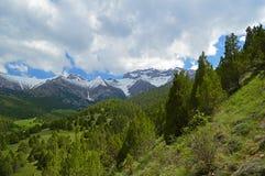 Enebro en las montañas foto de archivo