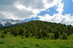 Enebro en las montañas, Kirguistán fotografía de archivo libre de regalías