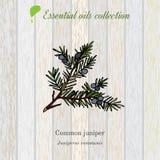 Enebro, etiqueta del aceite esencial, planta aromática Fotos de archivo