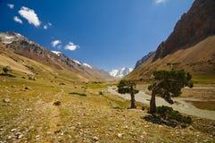 Enebro y montañas Fotos de archivo libres de regalías