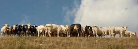 Enego в провинции Виченца Стоковое Изображение RF