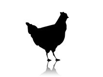 Enegreça a silhueta da galinha Imagem de Stock