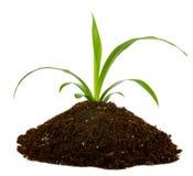 Enegreça a terra e a planta verde imagem de stock royalty free