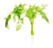 Eneldo verde fresco aislado en blanco Fotos de archivo libres de regalías