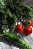 Eneldo y pepino frescos en una toalla de cocina, luz dura del tomate imagen de archivo