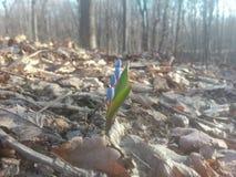 Energía de la primavera Foto de archivo libre de regalías