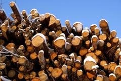 Energía de madera de la picea y de abedul Imágenes de archivo libres de regalías