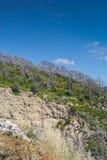 Energía perdida del bosque muerto Imagen de archivo libre de regalías