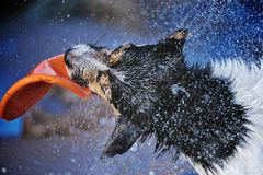 Energetic Dog Royalty Free Stock Images