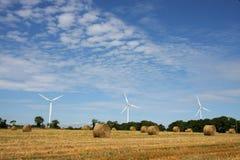 energetycznej rośliny wiatr Obrazy Royalty Free