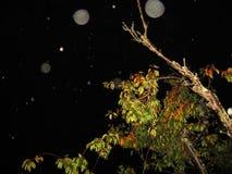 Energetyczni okręgi nad drzewem przy nocą obraz royalty free