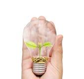 Energi - sparande ljus kula, idérik idé för ljus kula i hand Royaltyfria Bilder