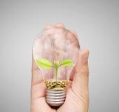 Energi - sparande ljus kula, idérik idé för ljus kula i hand Arkivbilder