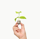 Energi - sparande ljus kula, idérik idé för ljus kula i hand Fotografering för Bildbyråer