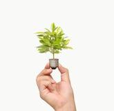 Energi - sparande ljus kula, idérik idé för ljus kula i hand Arkivfoto