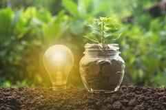Energi - sparande ljus kula och träd som växer på buntar Royaltyfri Foto