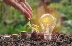 Energi - sparande ljus kula och träd som växer på buntar av mynt på naturen arkivbilder