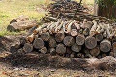 Energia del fuoco della natura degli alberi della legna da ardere Fotografia Stock Libera da Diritti