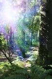 Energia di spirito del terreno boscoso Fotografia Stock Libera da Diritti