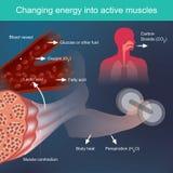 Energia em mudança nos músculos ativos ilustração do vetor