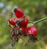 Energia rossa di autunno fotografie stock libere da diritti