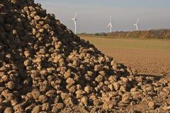 Energia, sugarbeets e turbine di vento Fotografie Stock