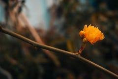 A energia uma flor dá-o imagem de stock