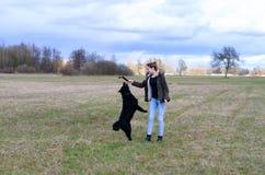 Energiczny psi doskakiwanie dla kija zdjęcia stock
