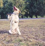 Energie der Freundschaft der Kinder und der Hunde die glückliche Kindheit mit Tieren stockfotos